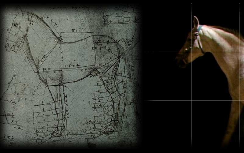 Leonardo interattivo alla GAM di Palermo