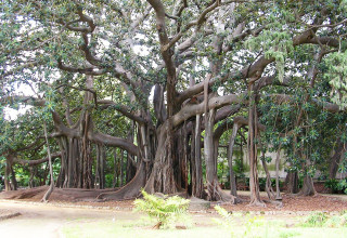 Orto Botanico: un'oasi ricca di magia