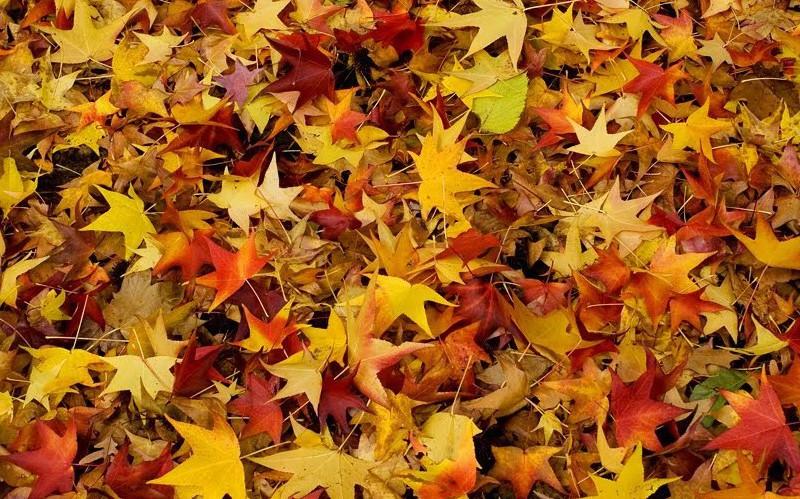 Tutti pazzi per il foliage